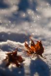 冬の光に抱かれて・・・