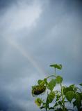 涙のあとには虹がでる。