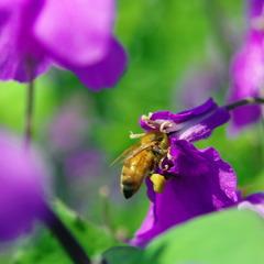 紫色のお花とハッチ 2