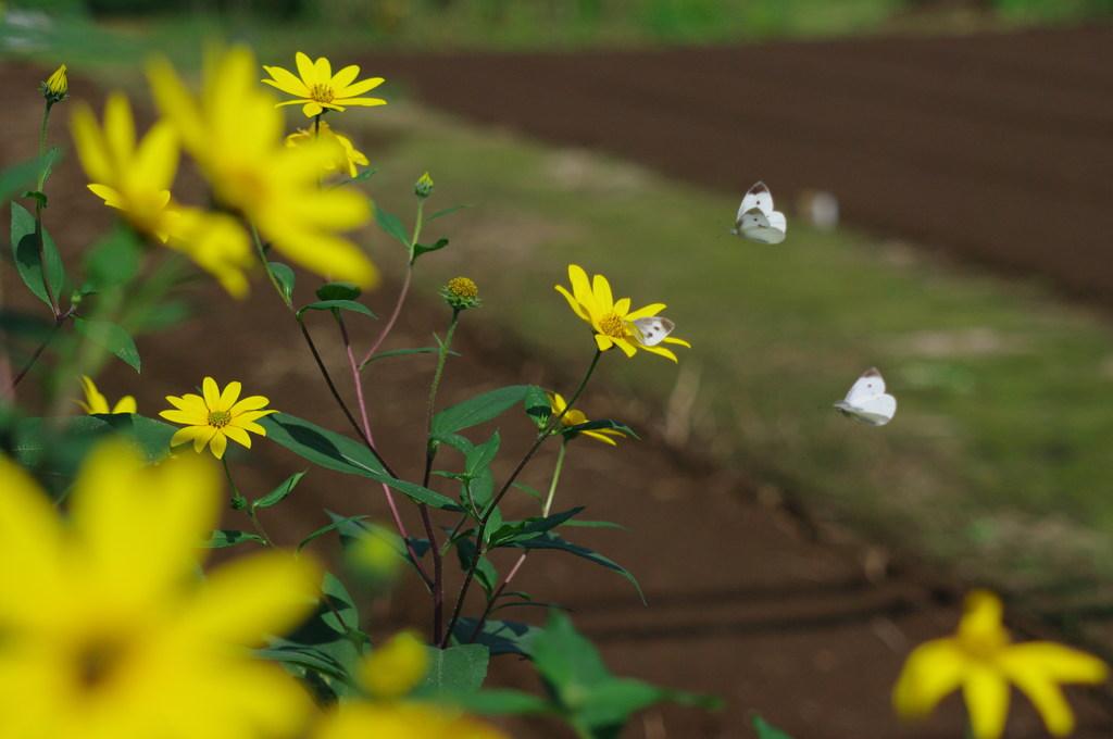 黄色いお花と仲良し3兄弟
