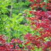 新緑と紅葉と