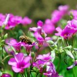 ピンクのお花とハッチ 2