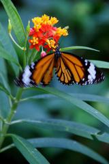 蝶々 ♯01