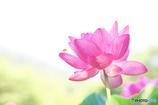 花蓮とクマ蜂