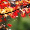 フライングな秋