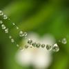 地味な梅雨玉