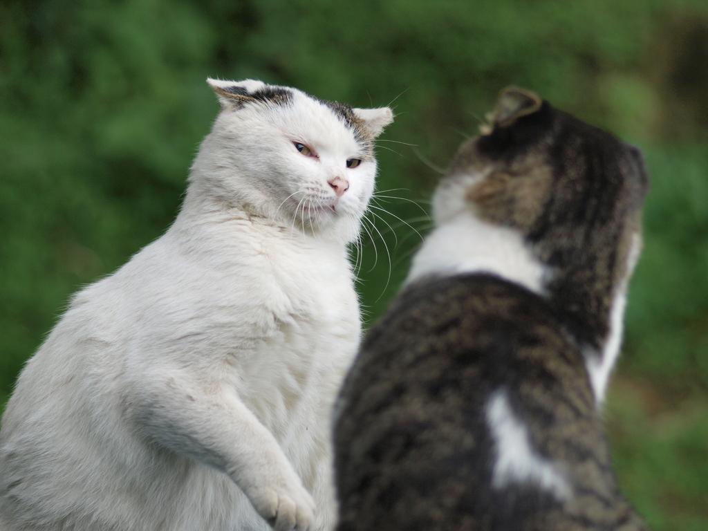 081019野良猫デュエル