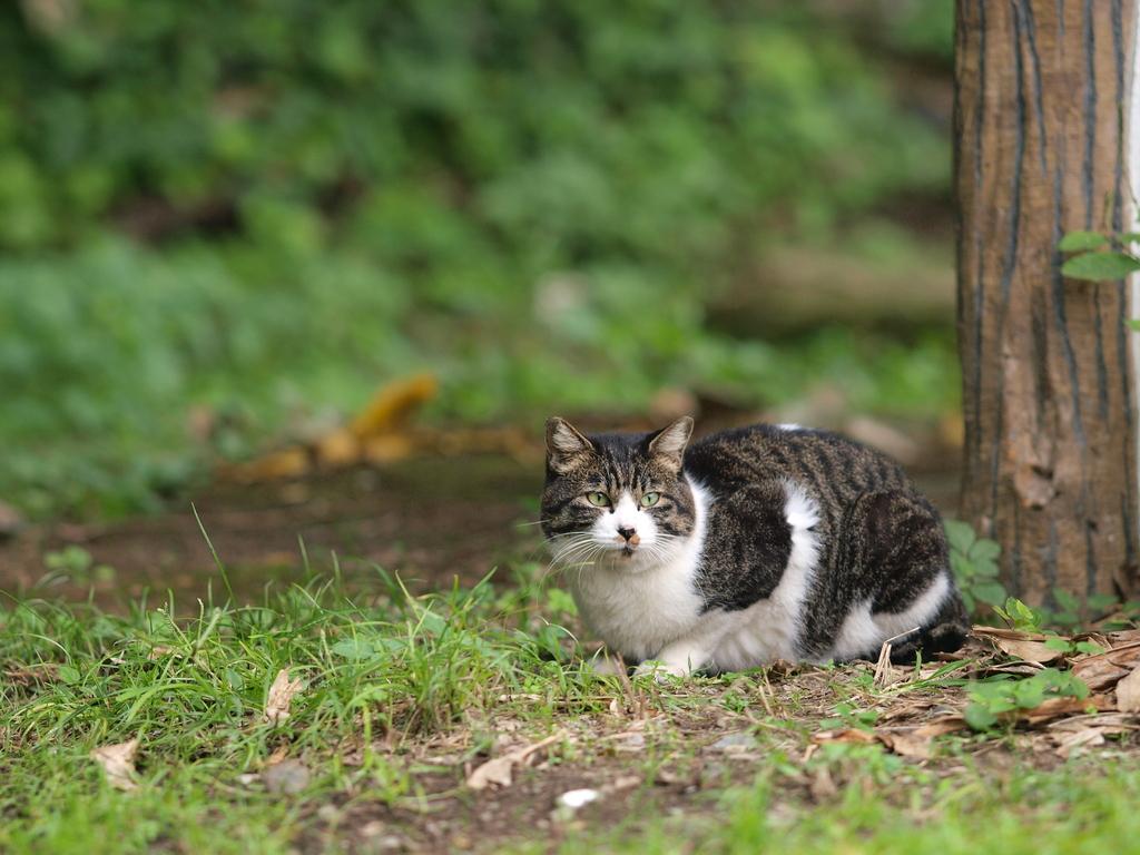 081018野良猫1