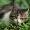081018野良猫2