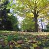 2008.11.19 昭和記念公園