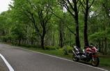 白樺とバイク