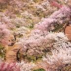 CANON Canon EOS 50Dで撮影した風景(梅祭り)の写真(画像)