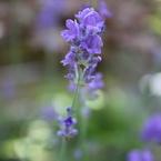 CANON Canon EOS Kiss X2で撮影した植物(私が主役☆)の写真(画像)