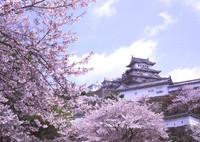 BRONICA GS-1で撮影した建物(春の姫路城)の写真(画像)
