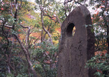 石碑と紅葉