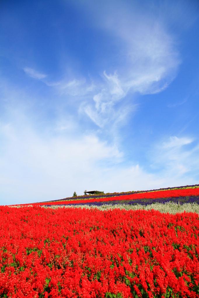 富良野お花畑