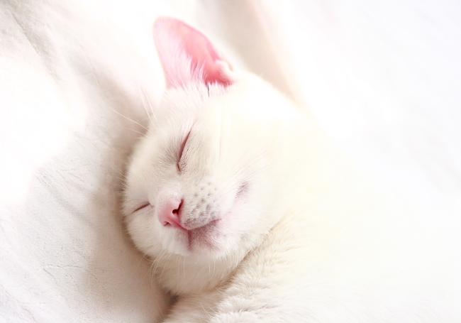 いい夢みてね