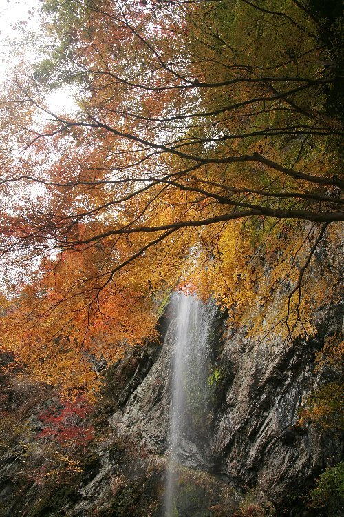 fall515_9466
