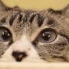 猫の瞳に映る世界