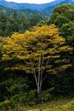 名も知らぬ樹