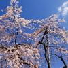 空と雲と桜