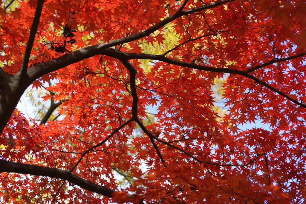 韓国でも紅葉は一緒ニダ-07