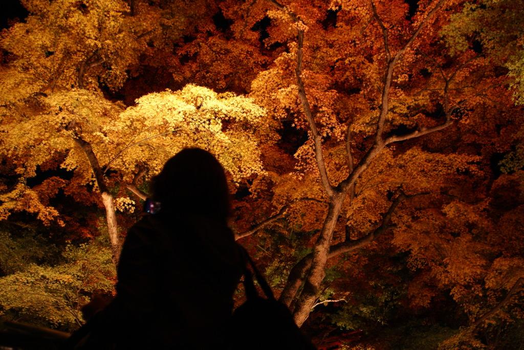 【京都】これは撮りますよね