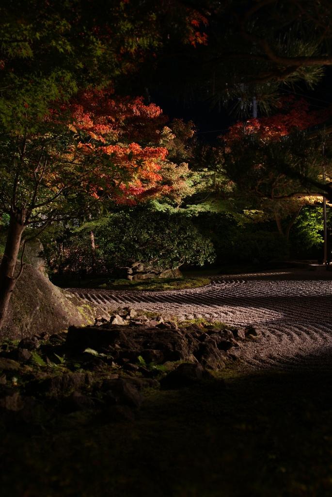 えん徳院の夜景