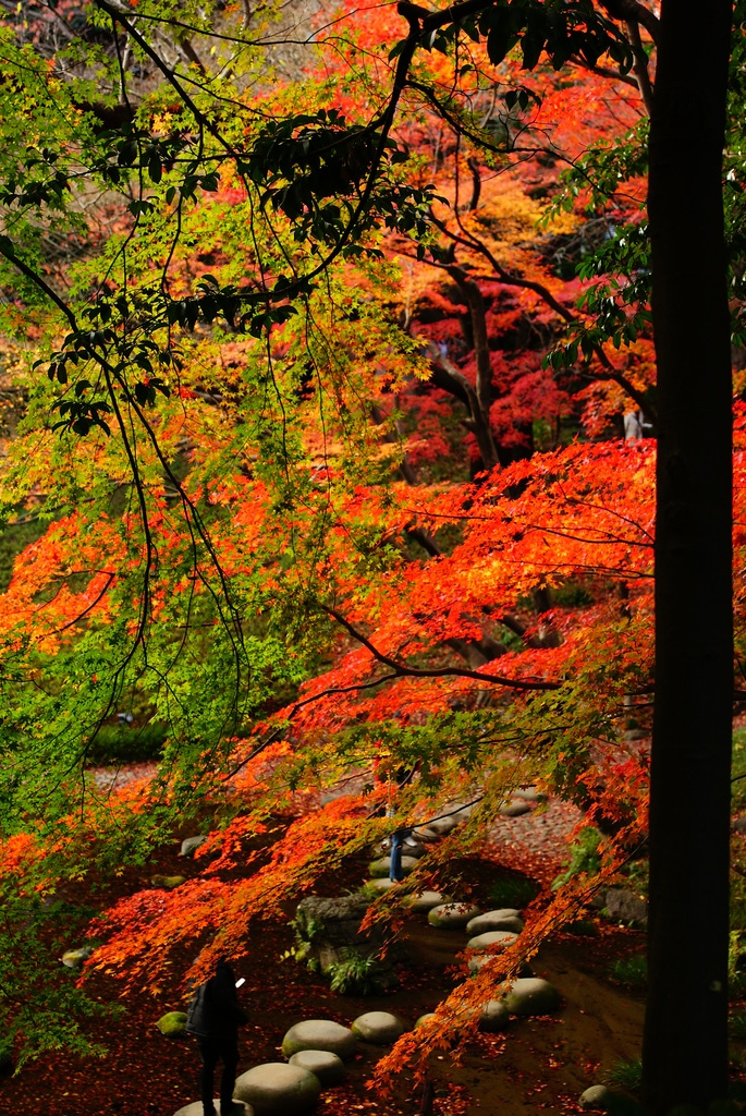 小石川後楽園の紅葉6