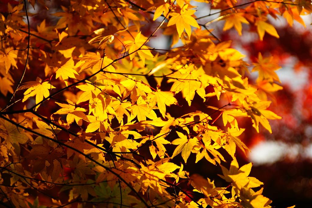 小石川後楽園の紅葉7