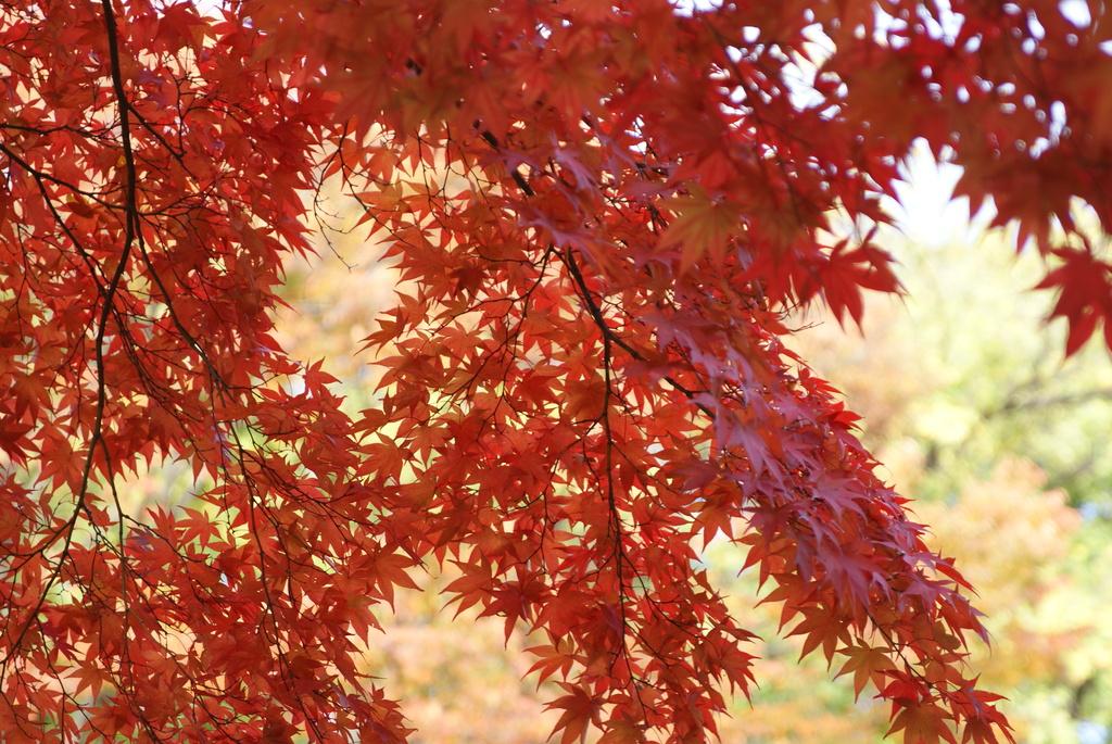 韓国でも紅葉は一緒ニダ-09