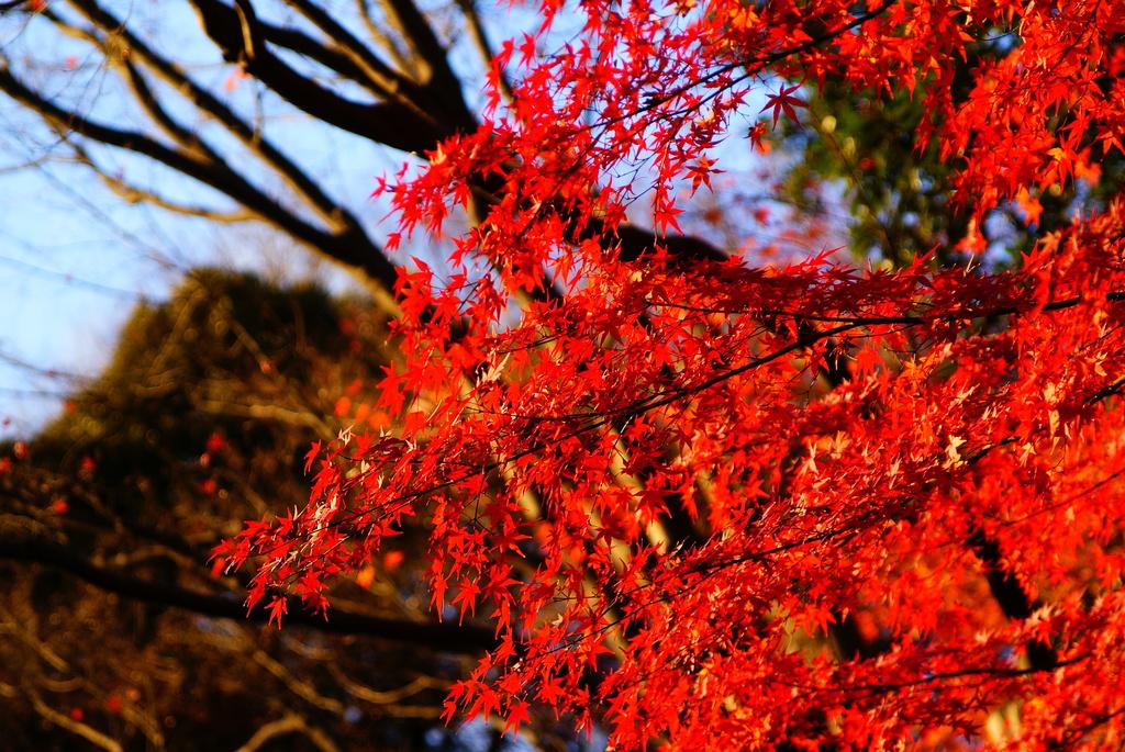 小石川後楽園の紅葉5