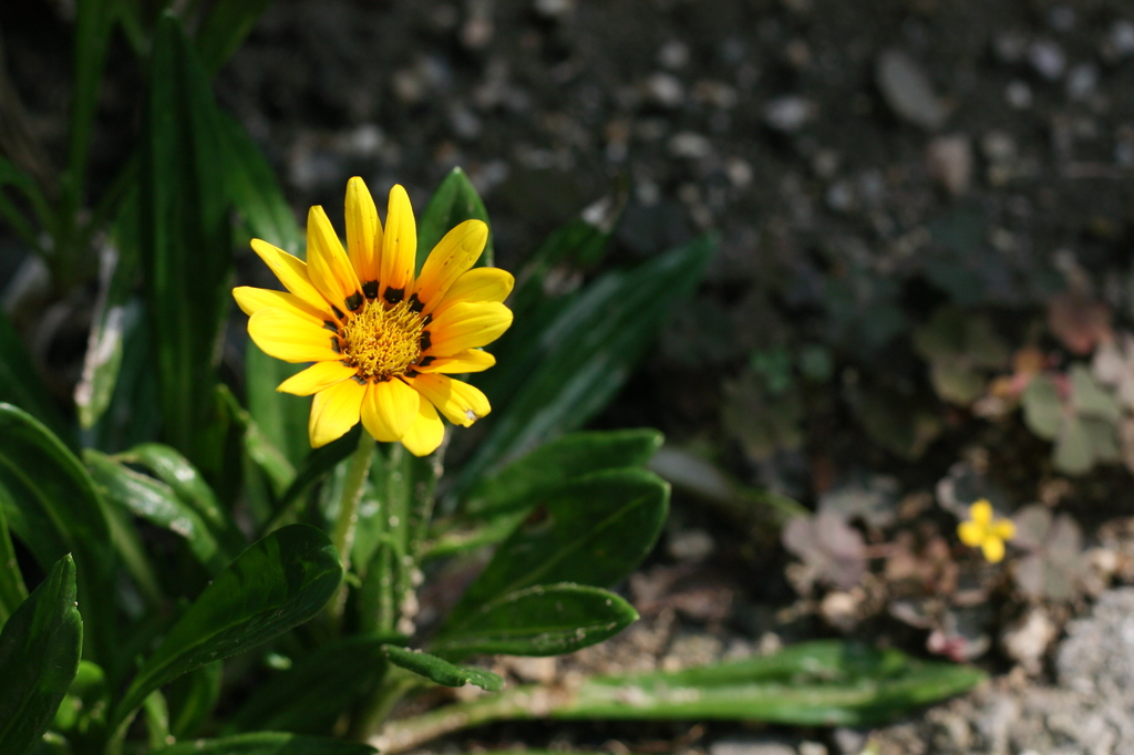 小さな花たち1