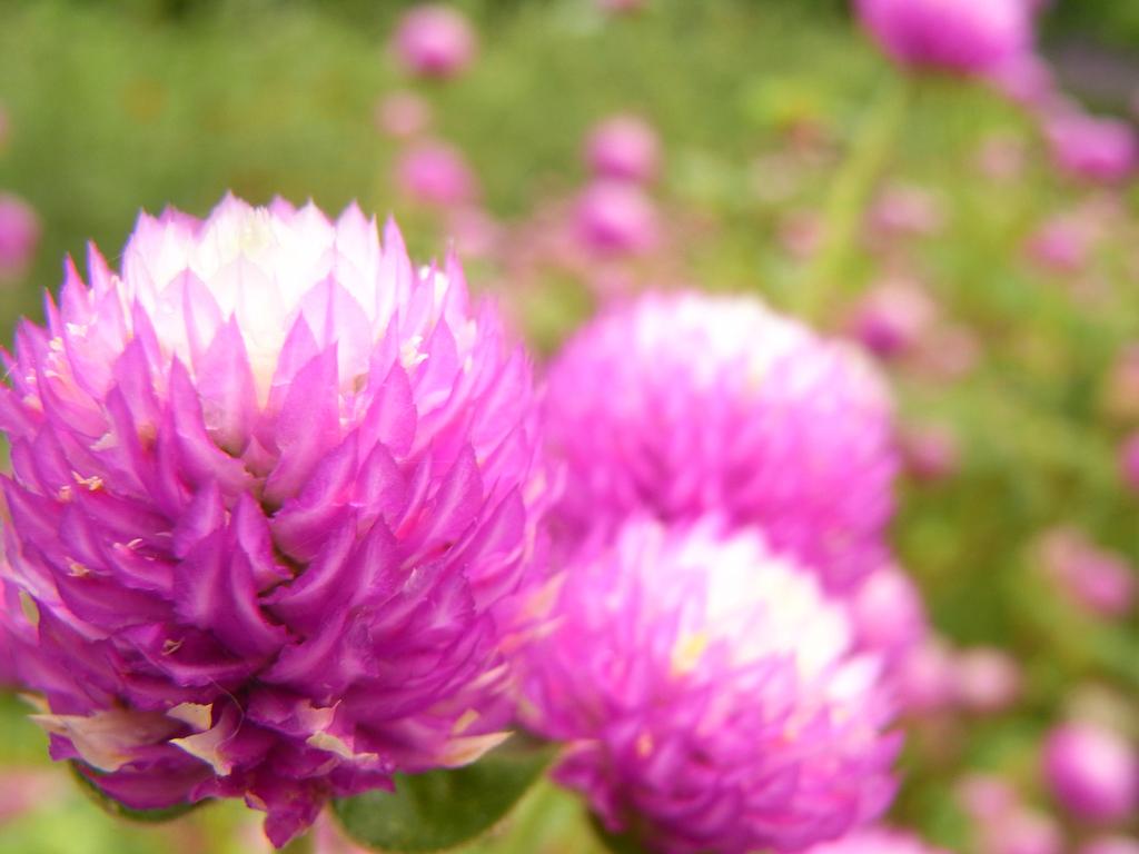 flower_007