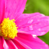 flower_004