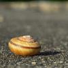 Snail_001
