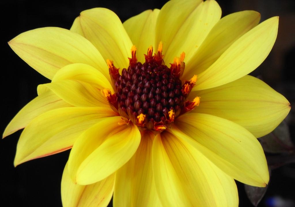 flower_014