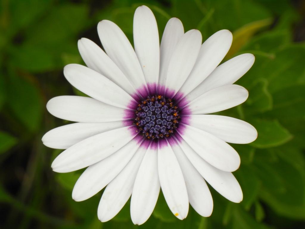 flower_002