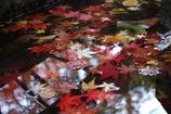 水辺の紅葉