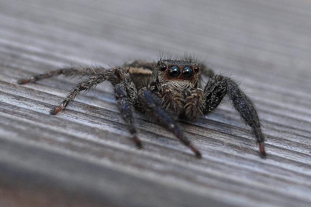 カメラ目線のおちゃめな蜘蛛さん