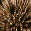 2008 やつしろ全国花火大会