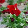 flower-No.1