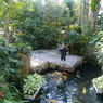 FUJIFILM FinePix A345で撮影した風景(ジャングル)の写真(画像)