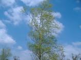 青空と木と爽やかな風