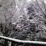 SHARP 824SHで撮影した風景(H21年1月24日土曜日)の写真(画像)