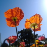 FUJIFILM FinePix A345で撮影した植物(陽の光を浴びて…)の写真(画像)