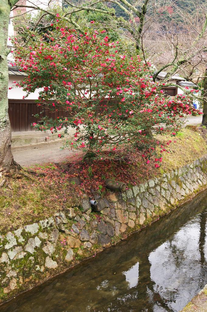 京都ー11