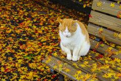 猫と散り紅葉