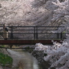 我が街の桜道