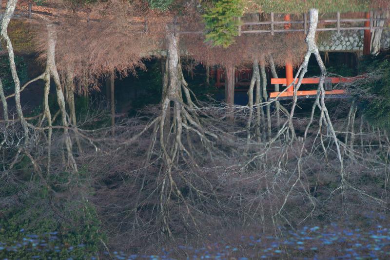 勾玉池(鳥見山)